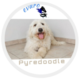 Pyredoodle