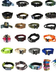 Assorted Collar