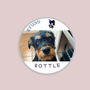 Rottle